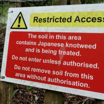 Japanese Knotweed? Hazardous Soil?